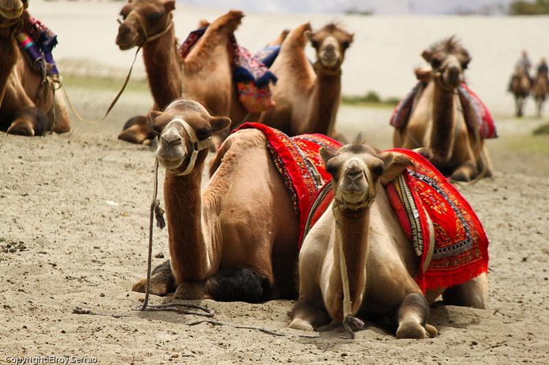 Marrakech en famille