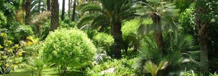 Les plus beaux jardins de Marrakech